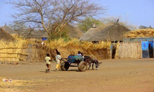 Zdjęcie SUDAN / Chartum / Chartum / Transport  wody
