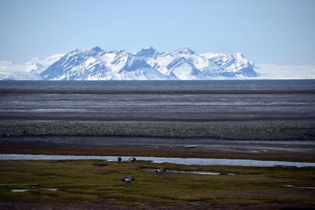Zdjęcia: Longyearbyen, Longyearbyen, Przyroda Svalbardu, SVALBARD