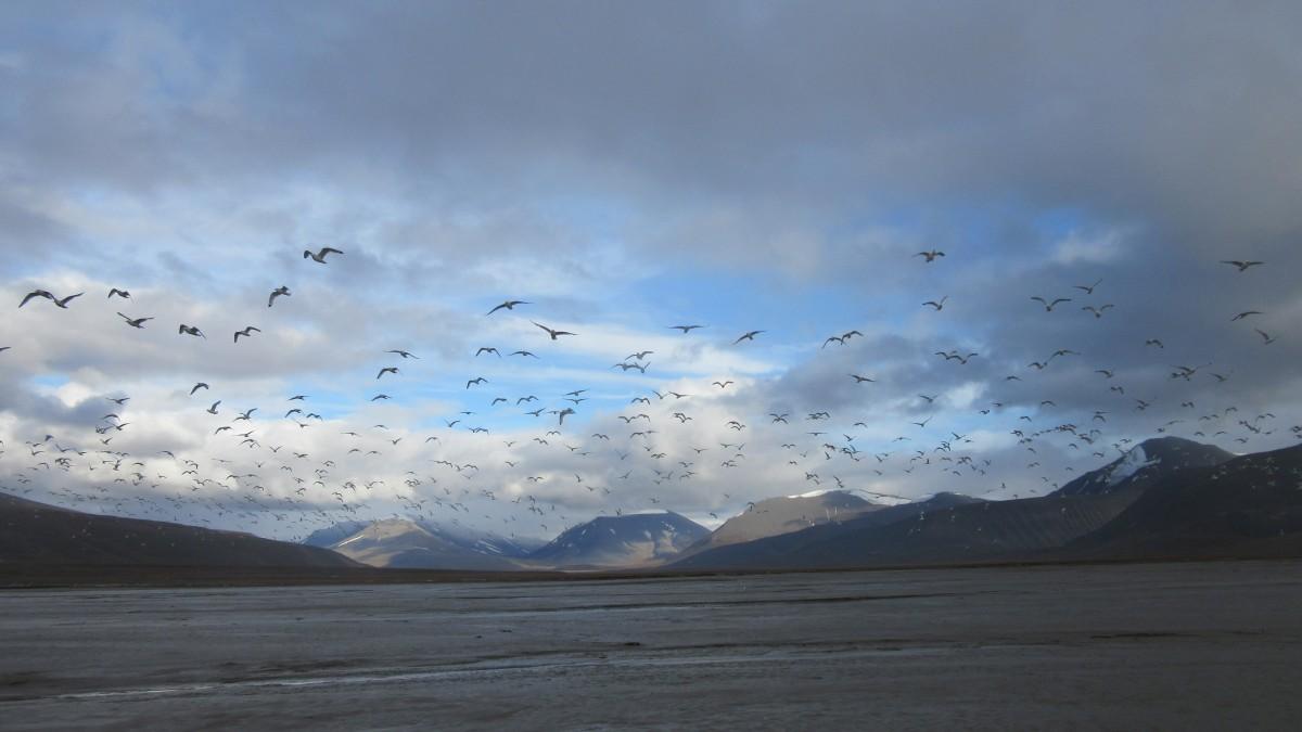 Zdjęcia: Colesbukta , Svalbard, Spitsbergen zatoka Colesbukta , SVALBARD