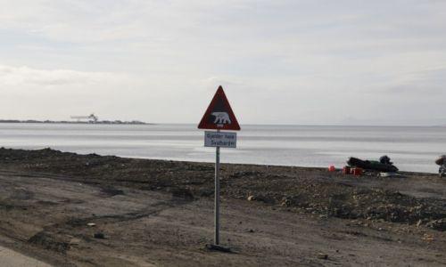 Zdjęcie SVALBARD / Spitsbergen / Longyearbyen / Uwaga na miśki