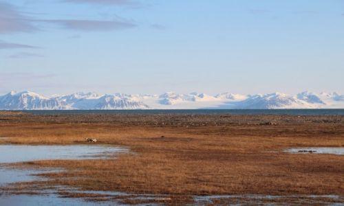 Zdjęcie SVALBARD / Spitsbergen / Isfjorden / Spitsbergen