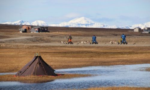 Zdjęcie SVALBARD / Spitsbergen / okolice Longyearbyen / Spitsbergen, psiaki