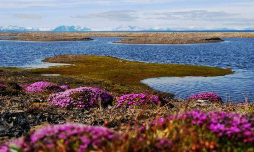 "Zdjęcie SVALBARD / Spitsbergen środkowy / Longyearbyen / konkurs"""