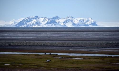 Zdjęcie SVALBARD / Longyearbyen / Longyearbyen / Przyroda Svalbardu