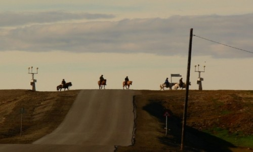 Zdjecie SVALBARD / Longyearbyen / lotnisko / konie