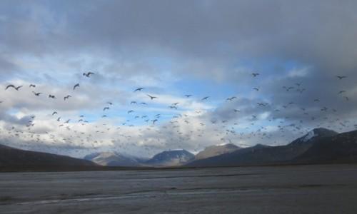 Zdjecie SVALBARD / Svalbard / Colesbukta  / Spitsbergen zatoka Colesbukta