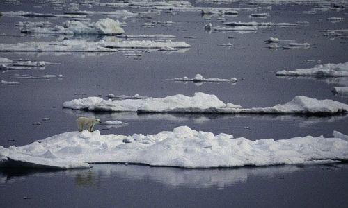 Zdjecie SVALBARD / Spitsbergen / Hornsund / Niedźwiedź polarny