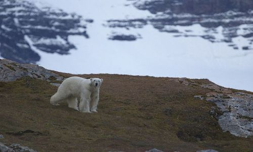 Zdjecie SVALBARD / Spitsbergen / Hornsund / Nied�wied� pola