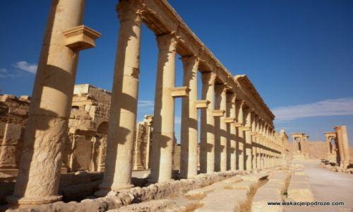 Zdjęcie SYRIA / - / Palmyra / W ruinach Palmyry