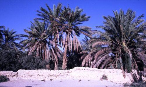 SYRIA / Środkowa Syria / Palmyra / Oaza