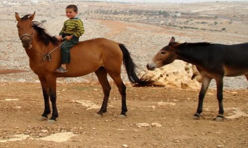 Zdjęcie SYRIA / Północno-zachodnia Syria / okolice Aleppo / Na oklep