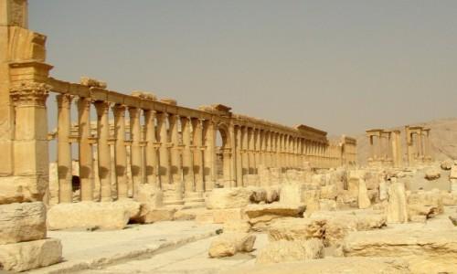 Zdjęcie SYRIA / Pustynia Syryjska / Palmyra / Wielka Kolumnada