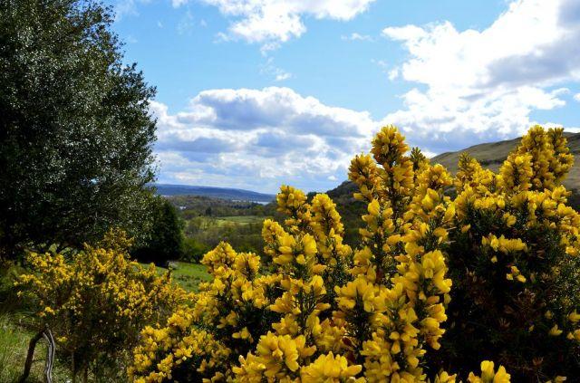 Zdjęcia: ., ., szkockie kwiaty, SZKOCJA