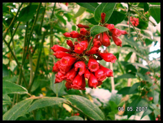 Zdjęcia: Edynburg Royal Botanic Garden, Szkocja, EDYNBURG- Królewski Ogród Botaniczny, SZKOCJA
