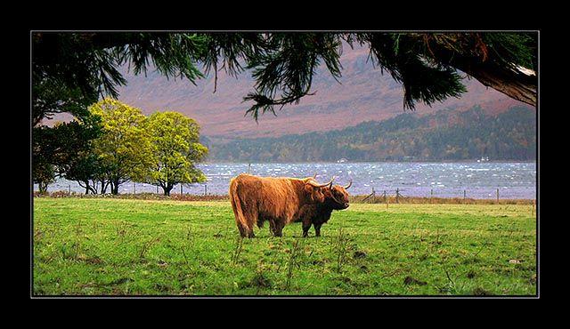 Zdjęcia: highland, highland, gdzies w highland, SZKOCJA