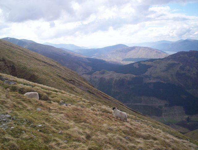 Zdjęcia: Koło Fort William, Highlands, Droga na szczyt- Ben Nevis, SZKOCJA