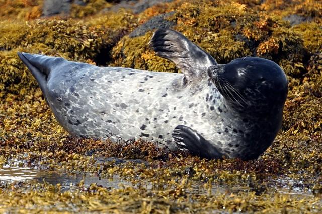 Zdjęcia: Loch Dunvegan., Wyspa Skye, Popisy malucha, SZKOCJA