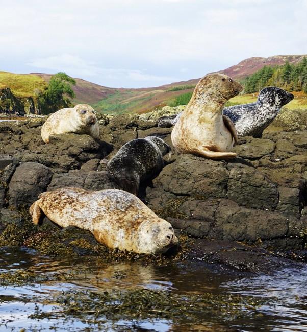 Zdjęcia: Loch Dunvegan., Wyspa Skye, Wielkie poruszenie, SZKOCJA