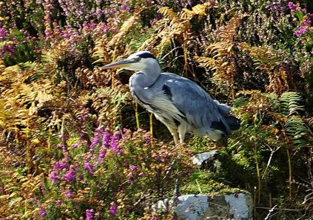 Zdjęcia: Loch Dunvegan, Wyspa Skye, W jesiennej scenerii, SZKOCJA