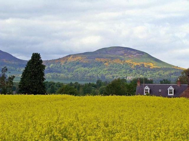 Zdjęcia: okolice Dryburgha, Scottish Borders, Elidon Hills, SZKOCJA