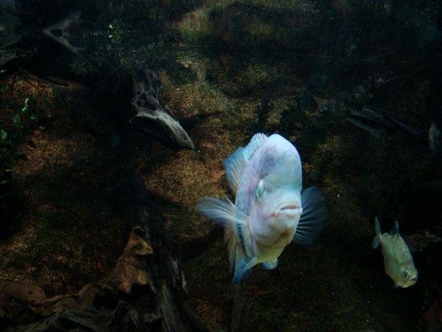 Zdjęcia: Edinburgh - okolice (Deep Ocean ), East Scotland, przedziwne ryby mozna tu spotkac , SZKOCJA
