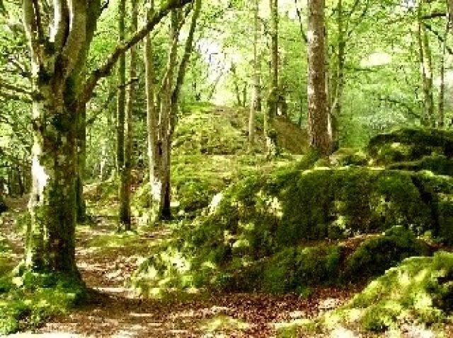 Zdj�cia: Glencoe, Highlands, dolina rzeki Coe, SZKOCJA