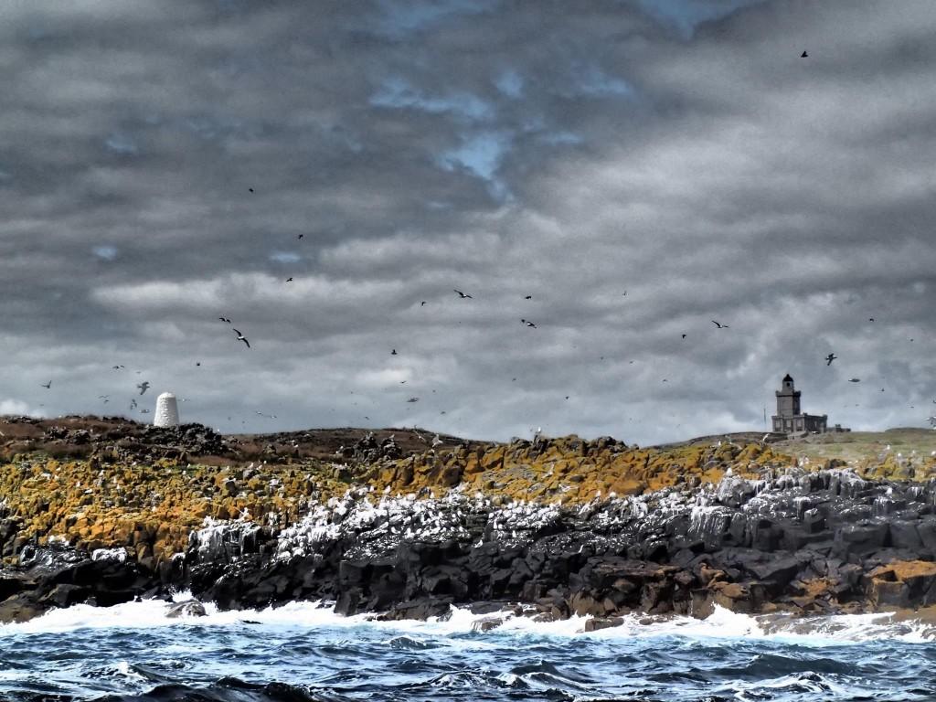 Zdjęcia: Isle of May, Isle of may, SZKOCJA