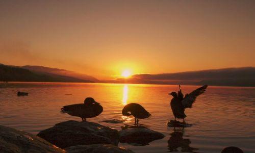 Zdjecie SZKOCJA / highlands / Loch Ness / Loch Ness