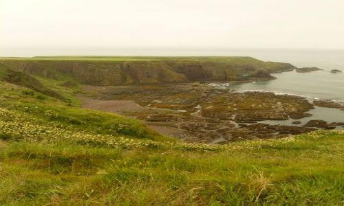 Zdjęcie SZKOCJA / Aberdeen-shire / Stonehaven / Zielono mi !