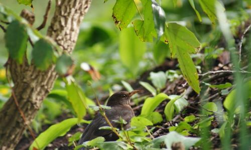 Zdjęcie SZKOCJA / Aberdeen / Park / Ptak
