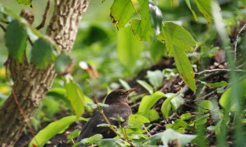 Zdjecie SZKOCJA / Aberdeen / Park / Ptak