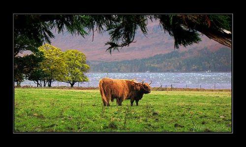 Zdjęcie SZKOCJA / highland / highland / gdzies w highland