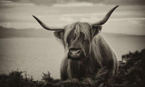 Zdjęcie SZKOCJA / Isle of Skye / Isle of Skye / Isle of Skye