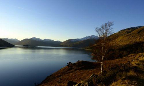 Zdjęcie SZKOCJA / Highlands / Loch  Quoich / Samotna z widokiem