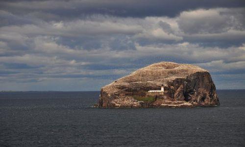 Zdjecie SZKOCJA / wschodnia Szkocja / Bass Rock / Bass Rock