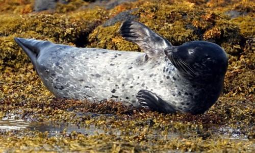 Zdjęcie SZKOCJA / Wyspa Skye / Loch Dunvegan. / Popisy malucha