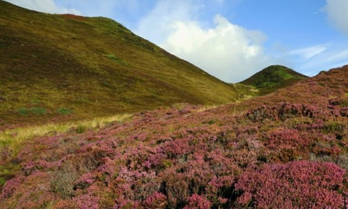 SZKOCJA / Wyspa Skye / Góry Quiraing / Przekwitają
