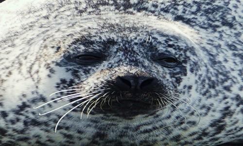 Zdjecie SZKOCJA / Wyspa Skye / Loch Dunvegan. / Portret