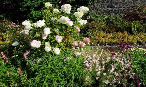 Zdjęcie SZKOCJA / Wyspa Skye / Ogrody zamku Dunvegan. / Paleta barw