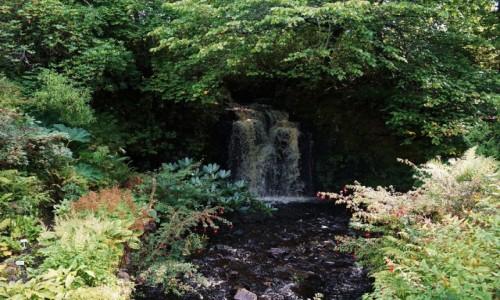 Zdjecie SZKOCJA / Wyspa Skye / Dunvegan / Ogród