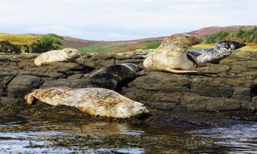SZKOCJA / Wyspa Skye / Loch Dunvegan. / Wielkie poruszenie
