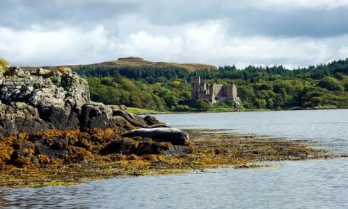 SZKOCJA / Wyspa Skye / Loch Dunvegan. / Focza kolonia z widokiem na zamek