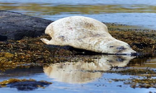 SZKOCJA / Wyspa Skye / Loch Dunvegan. / Do wody dla ochłody