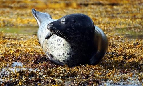 Zdjęcie SZKOCJA / Wyspa Skye / Loch Dunvegan. / Na boku
