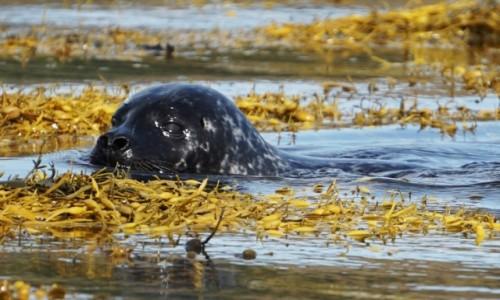 Zdjecie SZKOCJA / Wyspa Skye / Loch Dunvegan. / Z wody