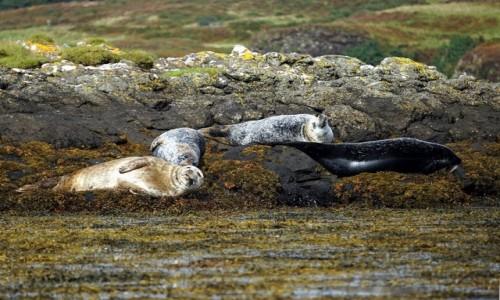 Zdjęcie SZKOCJA / Wyspa Skye / Loch Dunvegan / Odpoczywamy, nie przeszkadzać