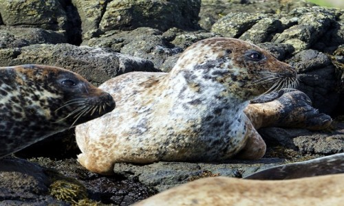 Zdjecie SZKOCJA / Wyspa Skye / Loch Dunvegan / Coś się dzieje