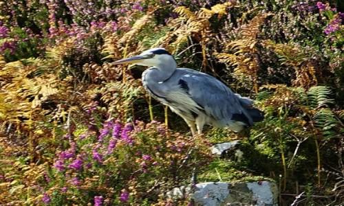 SZKOCJA / Wyspa Skye / Loch Dunvegan / W jesiennej scenerii