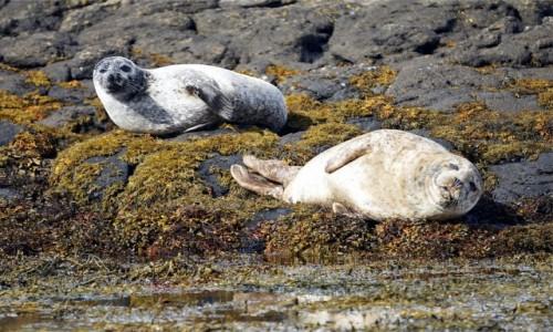 Zdjęcie SZKOCJA / Wyspa Skye  / Loch Dunvegan / Na kamiennej plaży