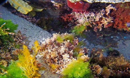 Zdjęcie SZKOCJA / South-- East  Scotland / Dunbar / mala zatoczka w Dunbar